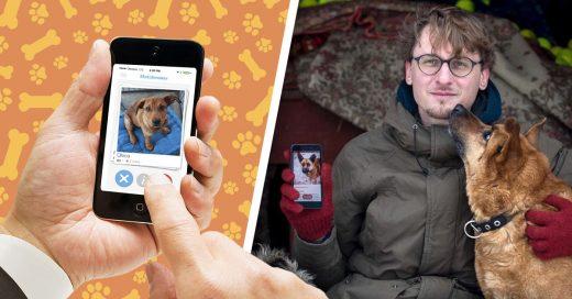 Cover Lanzan aplicación estilo Tinder para adoptar perritos