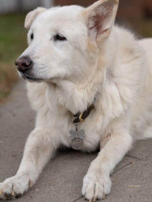 perrito blanco viejito