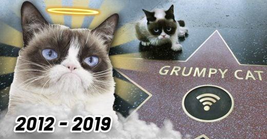 COVER Muere Grumpy cat la felina más carismática y malhumorada de Internet