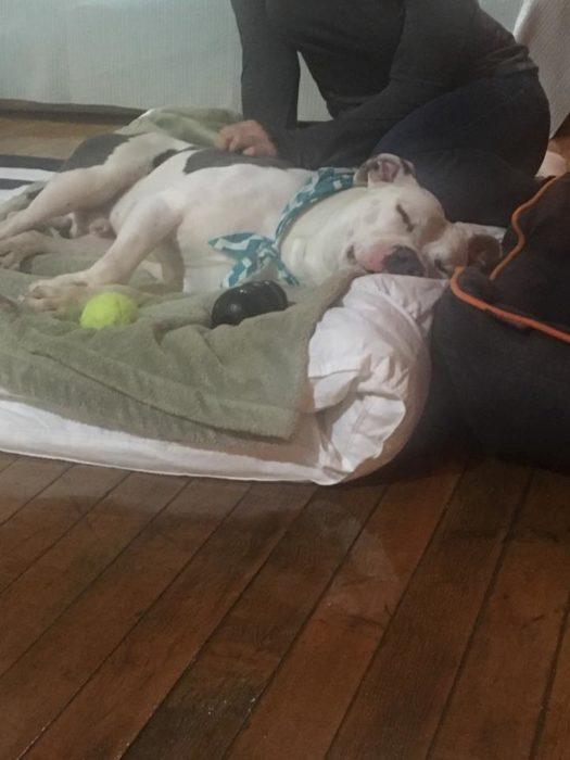 Abandonan a perrito y los espera en un colchón