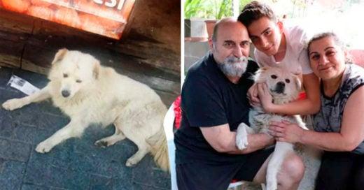 COVER La conmovedora alegría de un perrito callejero luego de que su familia por fin lo encontró