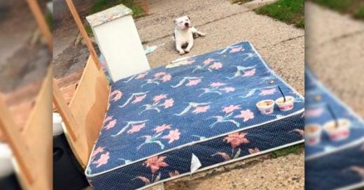COVER Lo tiraron a la basura, este perrito espera en un colchón a que sus dueños regresen