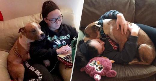 COVER Mujer salvó a un pitbull de ser sacrificado y este no puede dejar de abrazarla