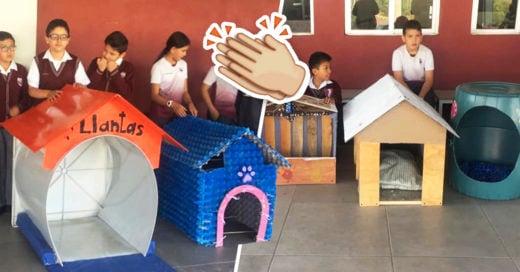 COVER Niños crean casitas para perros con material reciclable