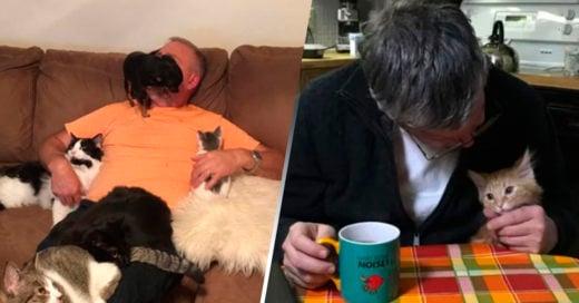 COVER Papás que juraban odiar a los gatos y ahora no pueden vivir sin ellos