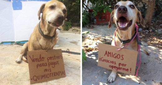 COVER Perrito con cáncer logró pagarse las quimioterapias vendiendo postres