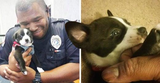 COVER Policía va a un albergue animal para arrestar a alguien y termina adoptando a un perrito