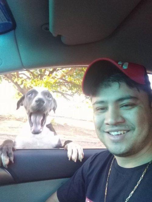 Joven abre restaurante 24 horas para perros recreoviral