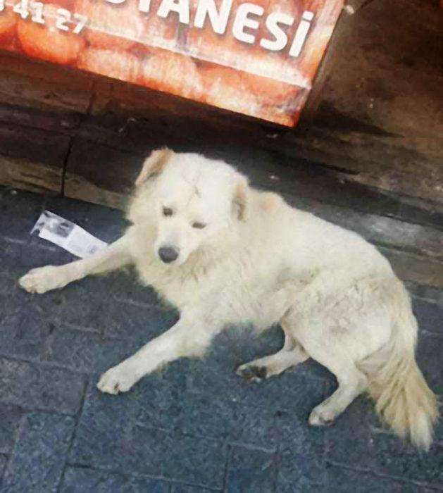 perrito callejero se pone feliz cuando su familia lo encuentra