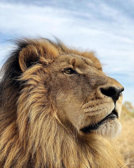 León guapo