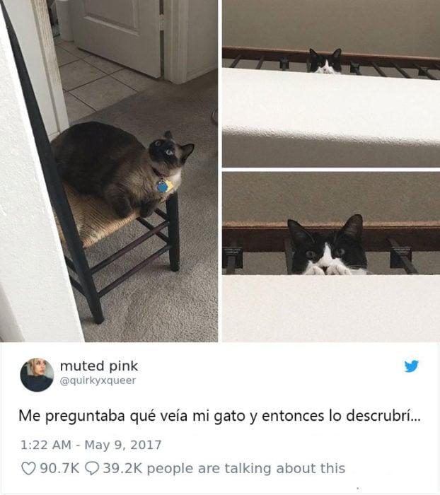 Tweets graciosos de gatos recreoviral
