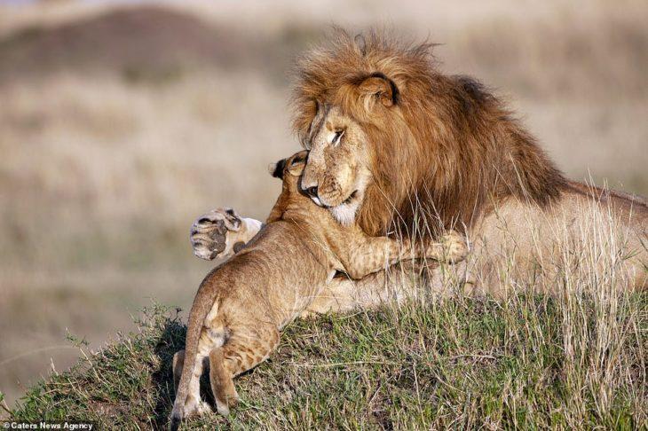 león abrazando a cachorro