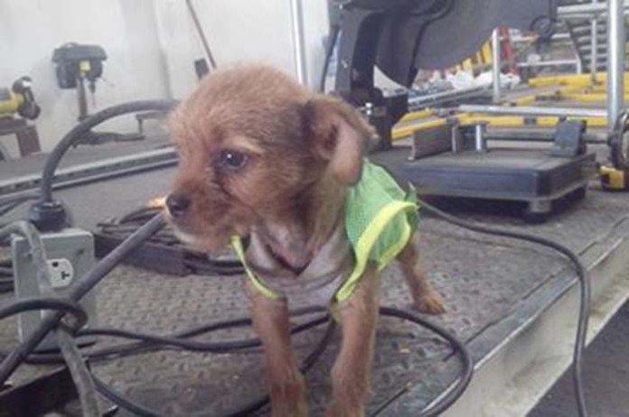 Adoptan a perrito en taller mecánico recreoviral