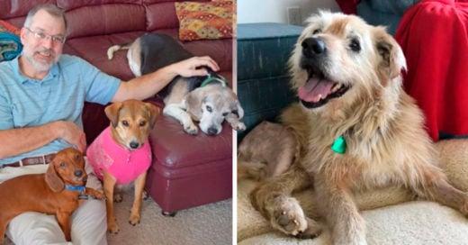 COVER Abre un asilo para perros viejitos que fueron abandonados