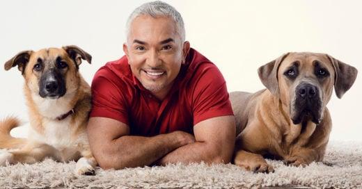 COVER César Millán explica por qué los perros callejeros son mejores mascotas