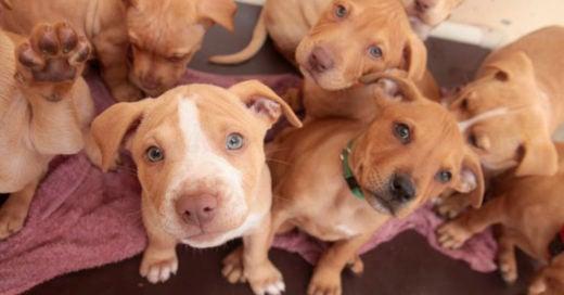 COVER Colombia prohíbe cortar colas y orejas a los perritos solo por estética