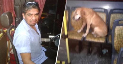 COVER Conductor permite que un perrito se suba al autobús durante tormenta