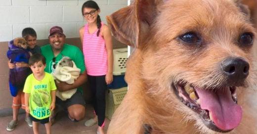 COVER Encontraron a su perro y adoptaron también a su amigo que nunca lo abandonó en las calles