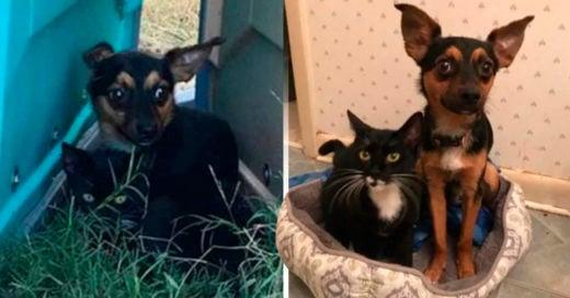 COVER Este perrito protegió y vigiló a un gatito hasta que fueron rescatados juntos