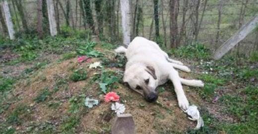 COVER Este perro tiene 5 años visitando diariamente la tumba de su dueño