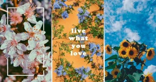 COVER Hermosos fondos de pantalla para las amantes de las flores