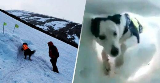 COVER Hombre bajo la nieve es rescatado por un perro y graba la evidencia
