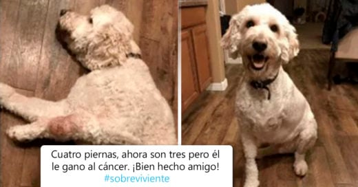 COVER Perritos que vencieron al cáncer