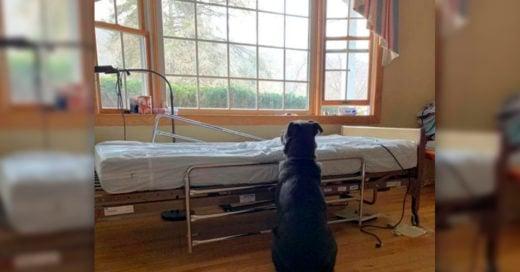 COVER Perro fue fotografiado esperando junto a la cama del hospital de su dueño, sin darse cuenta de que había fallecido
