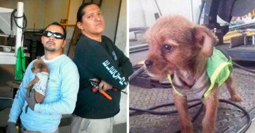 COVER Trabajadores adoptan a cachorro arrojado desde un auto en movimiento