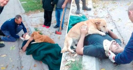 COVER perro argentino se niega a dejar solo a su dueño tras una caída estrepitosa