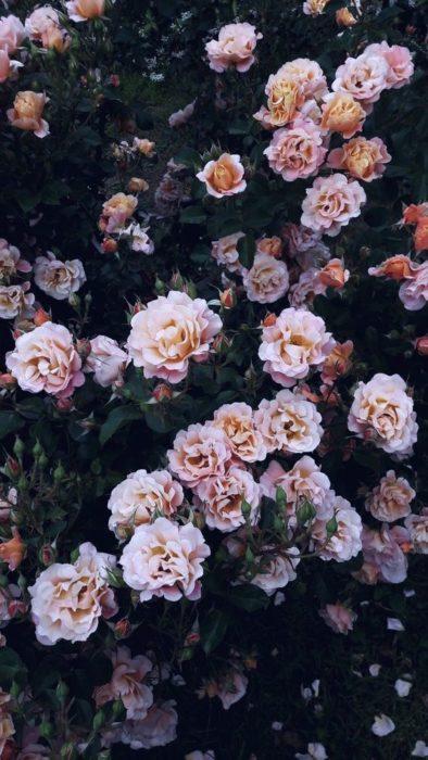 Flores wallapaper