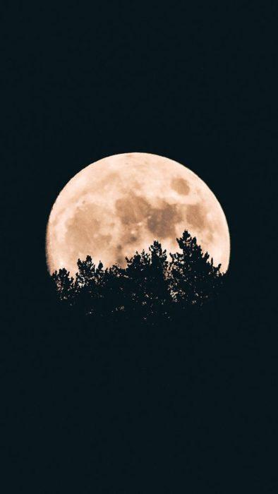 Luna llena fondo de pantalla