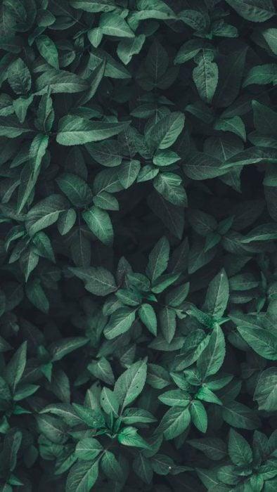 Plantas verdes fondo de pantalla