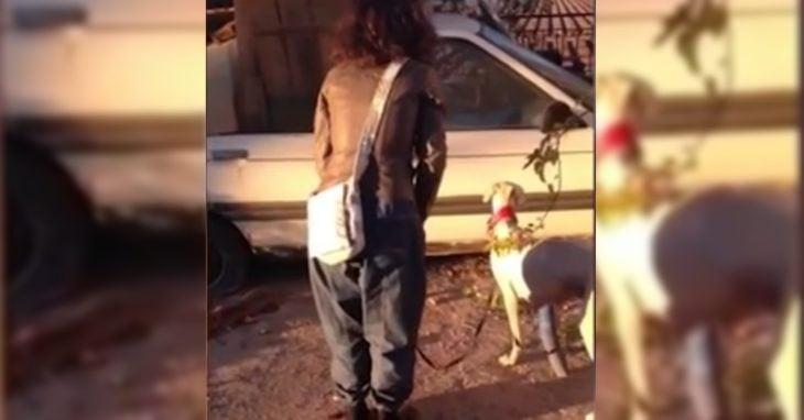 Greyhound chienne est sauvée