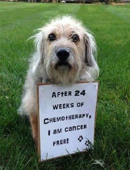 Perritos celebran que vencieron al cáncer