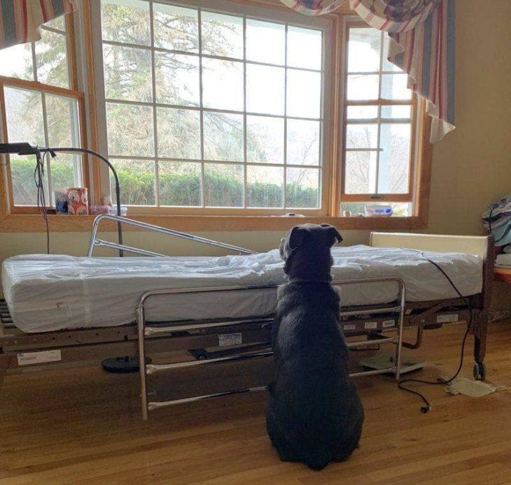 Perro espera a su dueño fallecido recreoviral