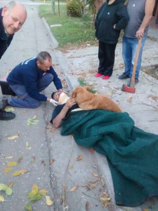 Perrito no abandona a su dueño accidentado