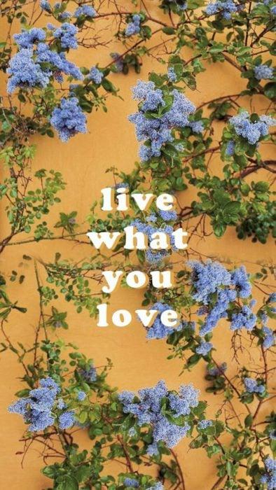 vive lo que amas