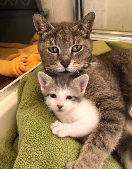 gata y su gatito