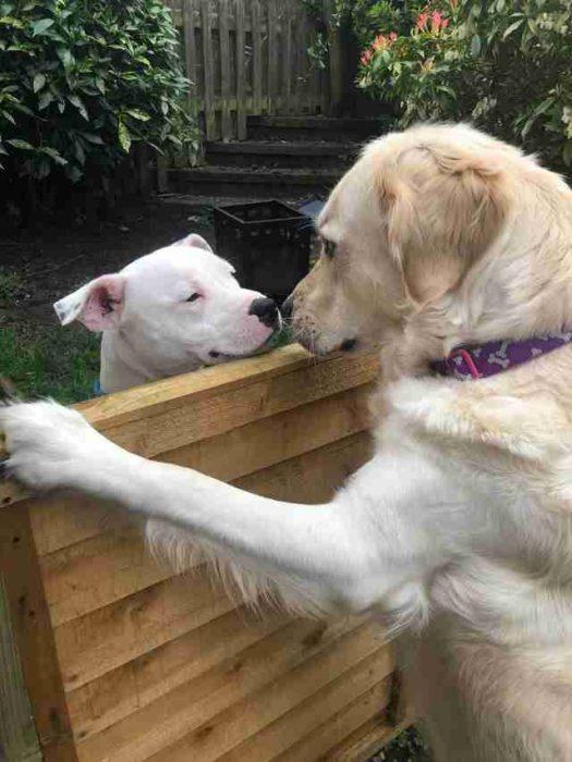 perritos vecinos enamorados