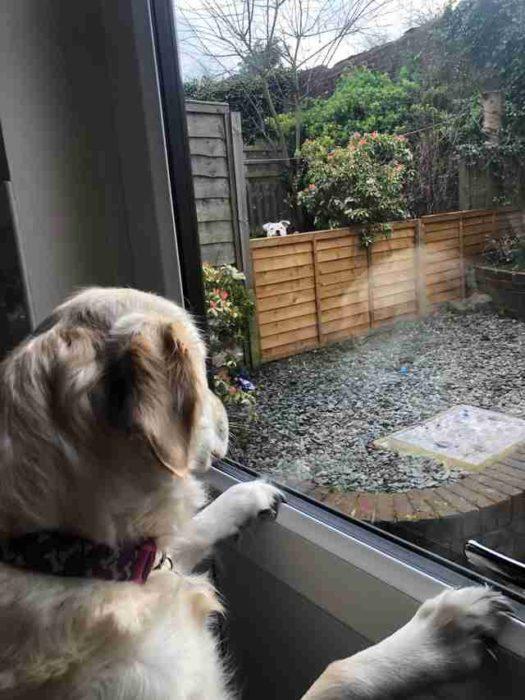 perritos vecinos se enamoran