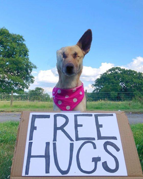 perrito abrazos