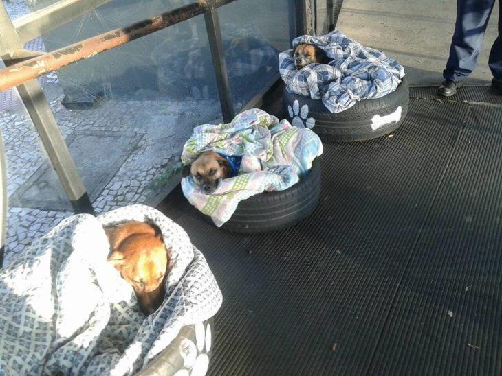 perritos en llantas