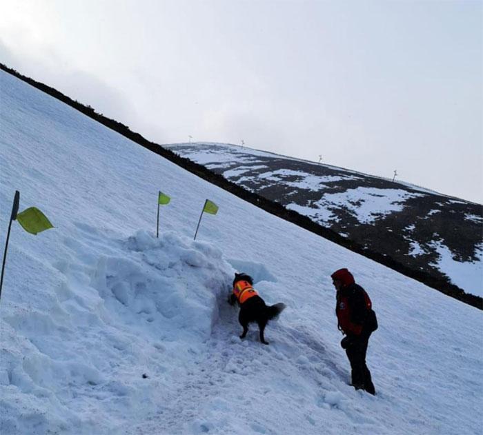 Perro de rescate encuentra a un hombre en la montaña lleno de nieve y lo salva
