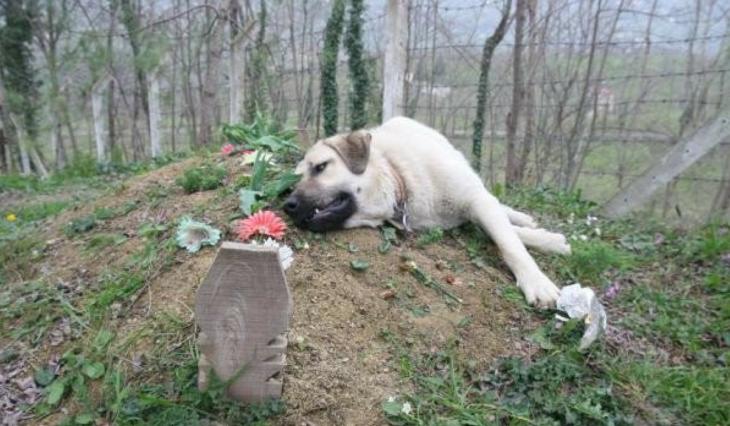 perrito sobre la tumba de su dueño