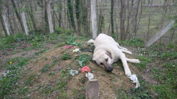 perrito obre la tumba de su dueño