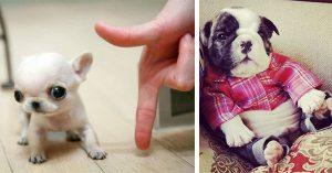 Los Perritos Más Bellos y Tiernos Que Jamás Hayas Visto