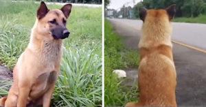 Muere perro que esperó todos los días a que su familia volviera por él luego de que lo abandonaran