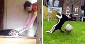 15 Perros desafortunados que olvidaron cómo ser perros