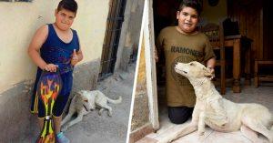 """""""Este perrito lo encontré en la calle, vendo mi patineta para llevarlo al veterinario"""""""